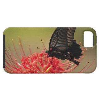 花、千葉のすばらしいモルモン教徒(Papilioのmemnon) iPhone SE/5/5s ケース