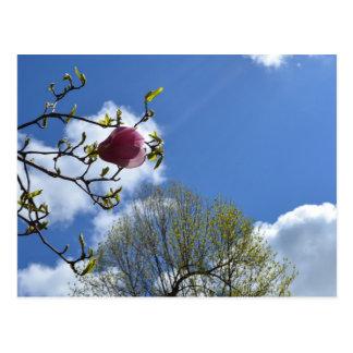 花、空および木 ポストカード