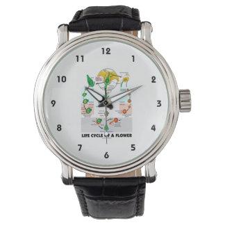 花(被子植物)のライフサイクル 腕時計