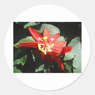 花、赤い情熱の花 ラウンドシール