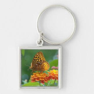花Spicebushの蝶花 キーホルダー