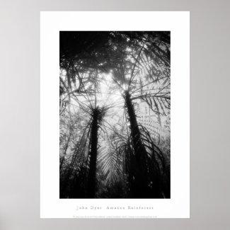 芸術ポスター: アマゾン雨林。 白黒