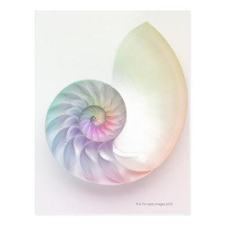 芸術的な着色されたオウムガイのイメージ はがき