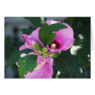 芽を搭載するピンクのHybiscus カード