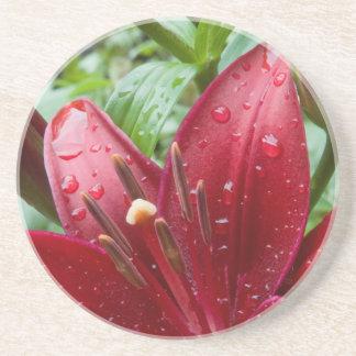 芽を搭載する赤いアジアユリ コースター