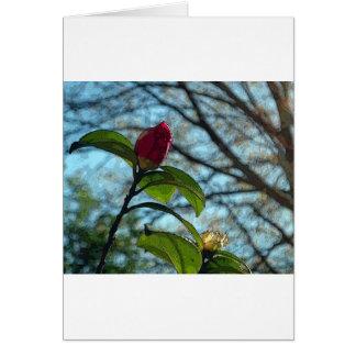芽 カード