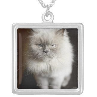 苛立たせられる見ている青ポイントヒマラヤ猫 シルバープレートネックレス