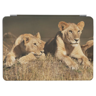 若いオスのライオンのプライド iPad AIR カバー