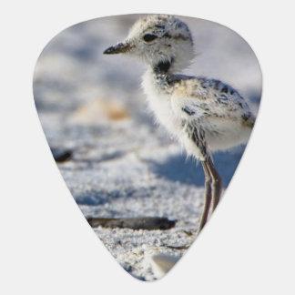 若いシロチドリ(Charadriusのalexandrinus) ギターピック