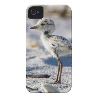 若いシロチドリ(Charadriusのalexandrinus) Case-Mate iPhone 4 ケース