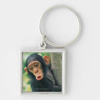 若いチンパンジー(鍋のtroglodytes) キーホルダー