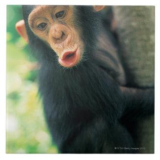 若いチンパンジー(鍋のtroglodytes) タイル
