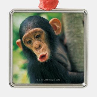 若いチンパンジー(鍋のtroglodytes) メタルオーナメント