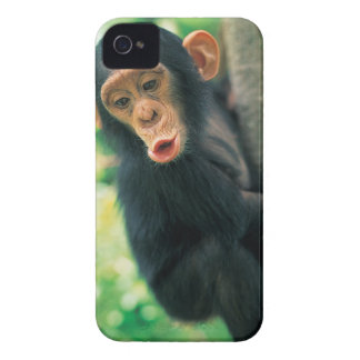 若いチンパンジー(鍋のtroglodytes) Case-Mate iPhone 4 ケース