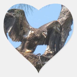 若いフロリダの白頭鷲のステッカー ハートシール