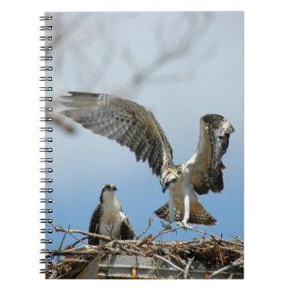 若いミサゴのタカのノート ノートブック