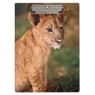 若いライオンのモデル クリップボード