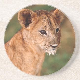 若いライオンのモデル コースター