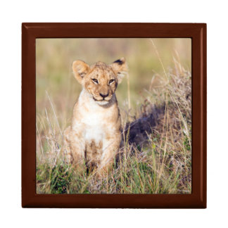 若いライオン ギフトボックス