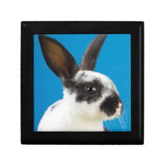 若いレックスのウサギ ギフトボックス