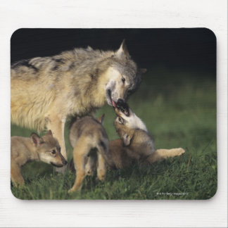 若い子犬を持つオオカミの母 マウスパッド