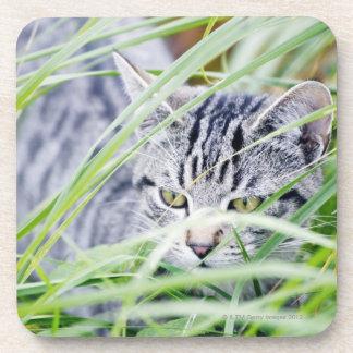 若い猫のポートレート コースター