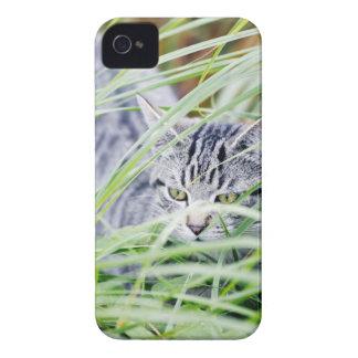 若い猫のポートレート Case-Mate iPhone 4 ケース