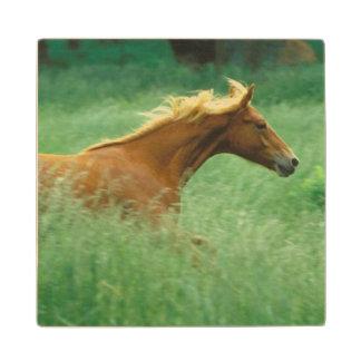 若い種馬は高いの草原を通って走ります ウッドコースター