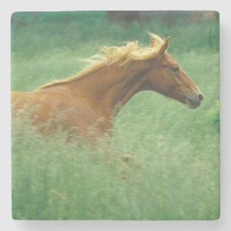 若い種馬は高いの草原を通って走ります ストーンコースター