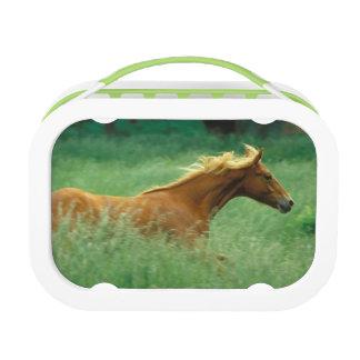 若い種馬は高いの草原を通って走ります ランチボックス