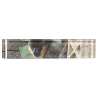 若いCapuchin猿 デスクネームプレート