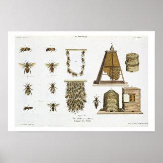 「若いLandsman」からの蜂そして養蜂、p ポスター