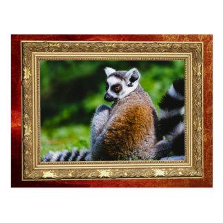 若いLemur、動物の写真撮影 ポストカード