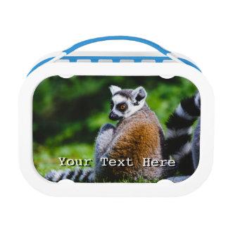 若いLemur、動物の写真撮影 ランチボックス