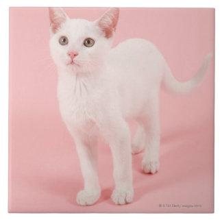 若く白い猫2 タイル
