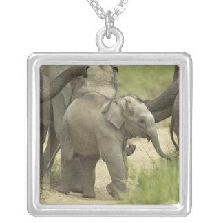 若者のインド/アジアゾウの物 シルバープレートネックレス