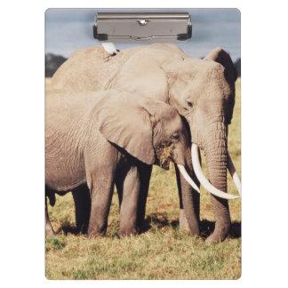 若者を持つ母象 クリップボード