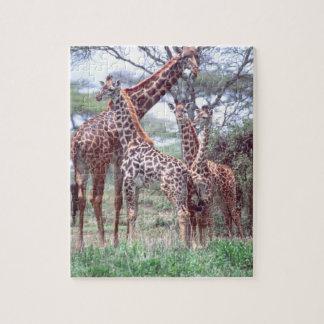 若者、Giraffaを持つキリンのグループか群れ ジグソーパズル
