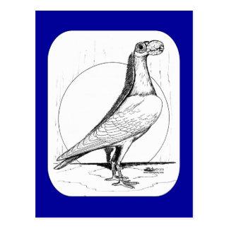 英国のキャリアPigeon1978 ポストカード