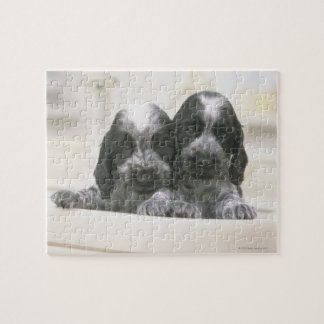英国のコッカースパニエルは犬の品種です。 それ ジグソーパズル