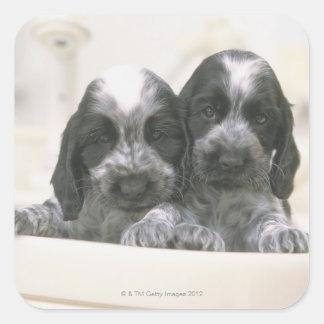英国のコッカースパニエルは犬の品種です。 それ スクエアシール
