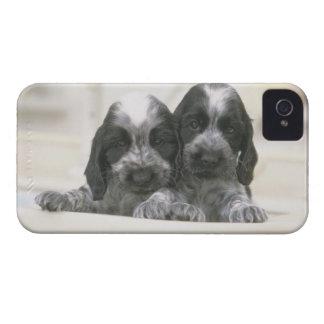 英国のコッカースパニエルは犬の品種です。 それ Case-Mate iPhone 4 ケース