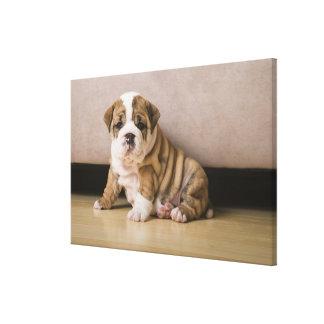 英国のブルドッグの子犬 キャンバスプリント