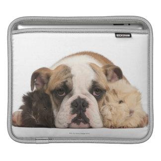英国のブルドッグの子犬(4か月古い)および2 guine iPadスリーブ