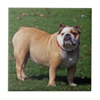 英国のブルドッグ犬の美しいタイルかtrivetのギフト タイル