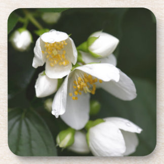 英国のミズキの薮の花 コースター