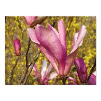 英国の庭の写真のプリントのマグノリア フォトプリント