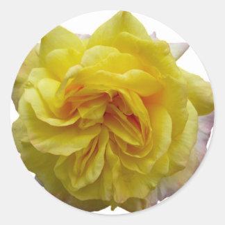 英国の庭の黄色バラ ラウンドシール