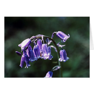 英国のBluebellの美しい カード