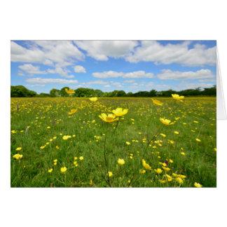 英国草原のキンボウゲ カード